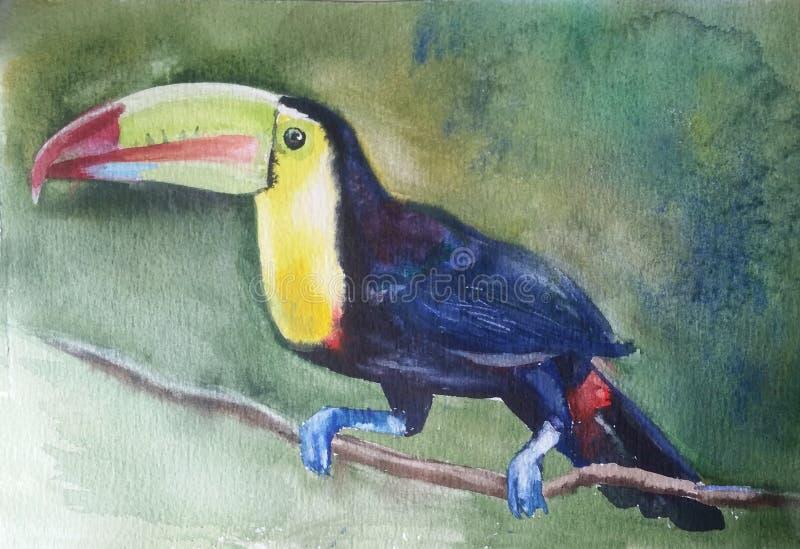 Птица Toucan сидит на ветви иллюстрация штока