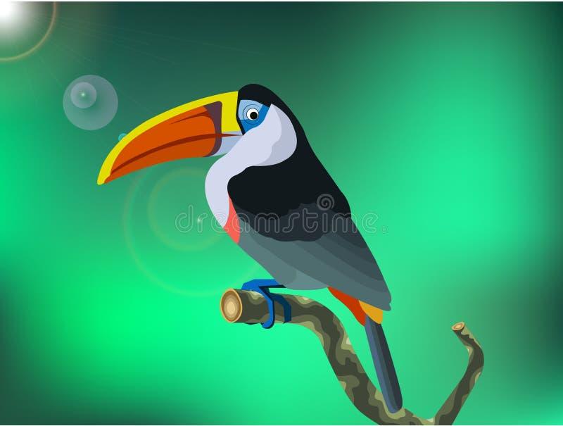 птица toucan стоковая фотография rf