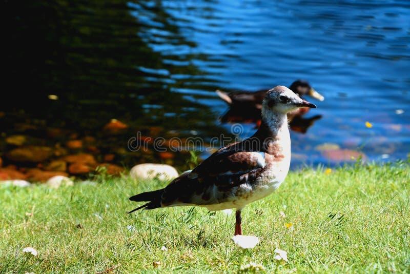 Птица uknown стоковая фотография rf