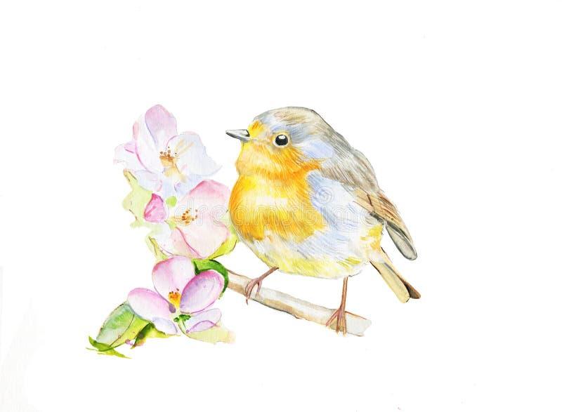 Птица zaryanka леса акварели на цветя ветви Иллюстрация природы Aquarelle иллюстрация вектора
