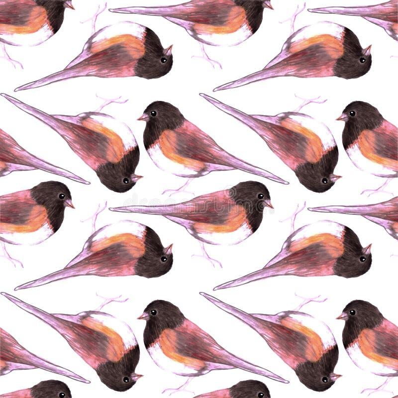 Птицы акварели птицы hyemalis темного наблюданного Junco или Junco безшовные крася предпосылку иллюстрация штока