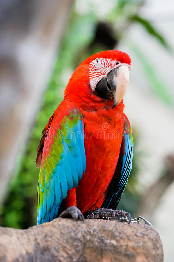 Птицы ары стоковые изображения