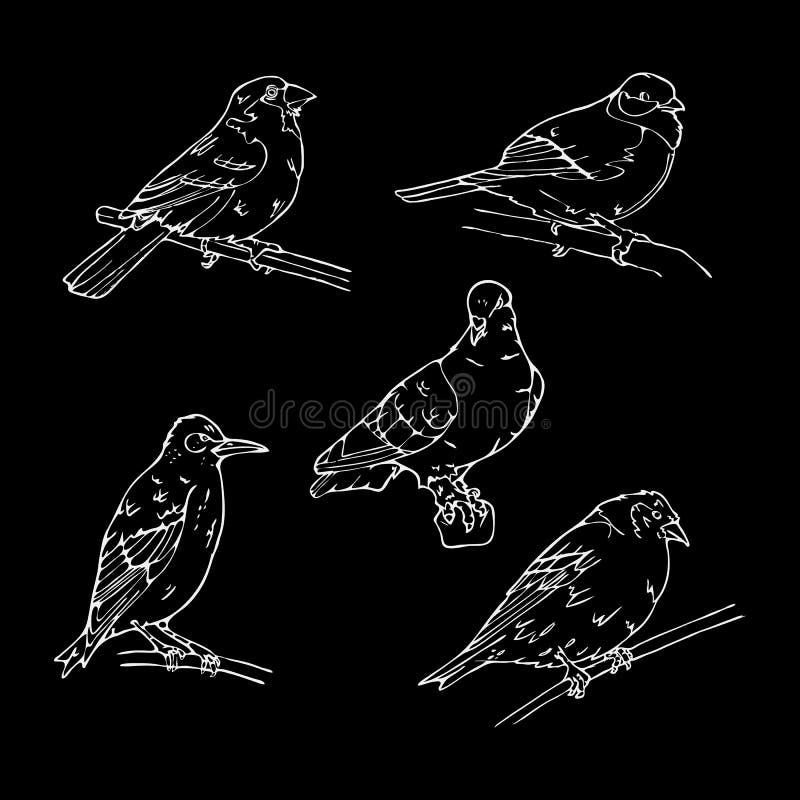 Птицы выгравировали стиль Штемпель, уплотнение Простой эскиз иллюстрация штока