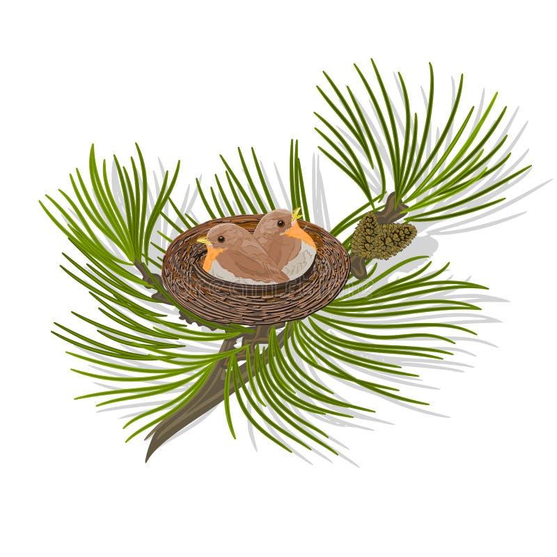 Птицы в гнезде на векторе ветви сосны бесплатная иллюстрация