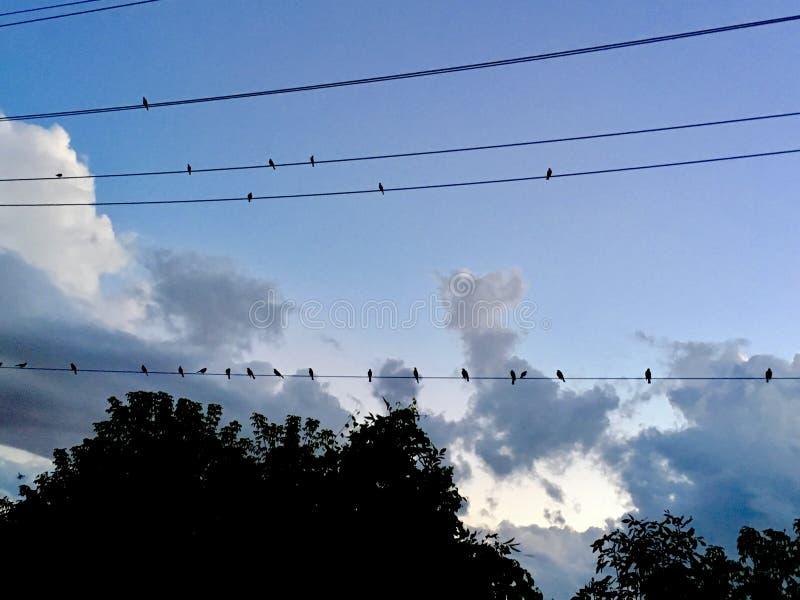 Птицы в линии стоковые фото