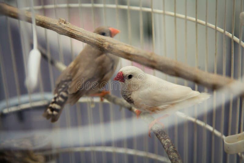 Птицы в клетке стоковые фотографии rf