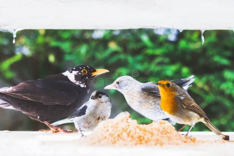 Птицы в кормушке в зиме стоковые изображения rf