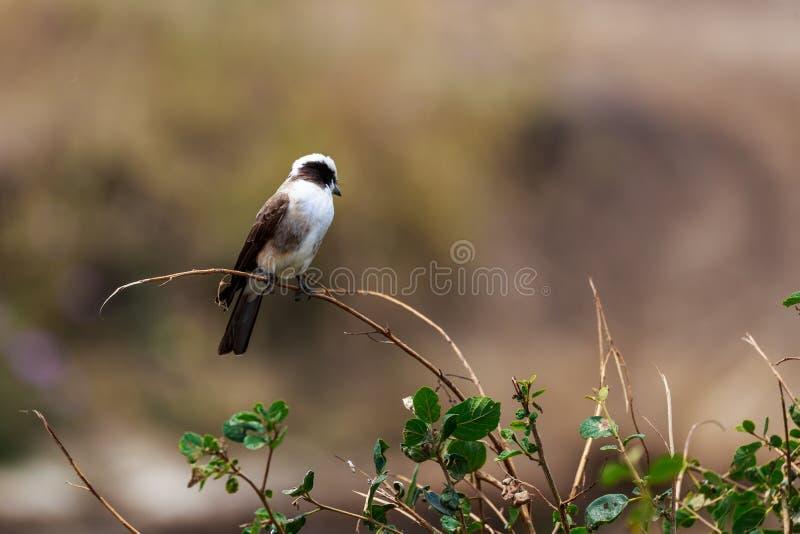Птицы в кратере Ngorongoro в Танзании стоковая фотография