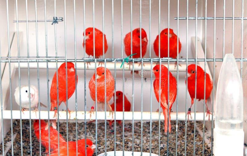 Птицы в клетке стоковое изображение