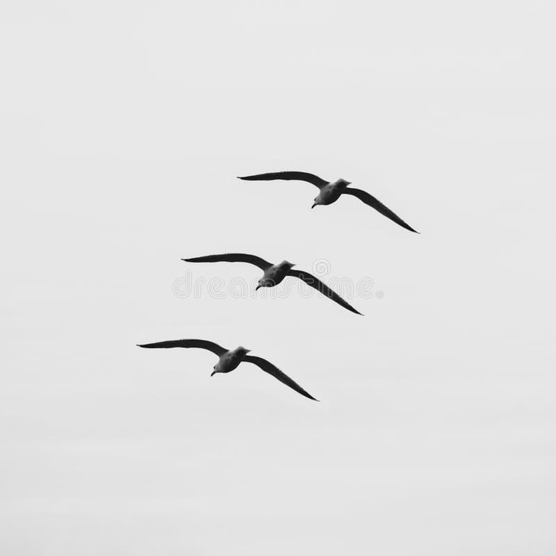 3 птицы в небе стоковые фото