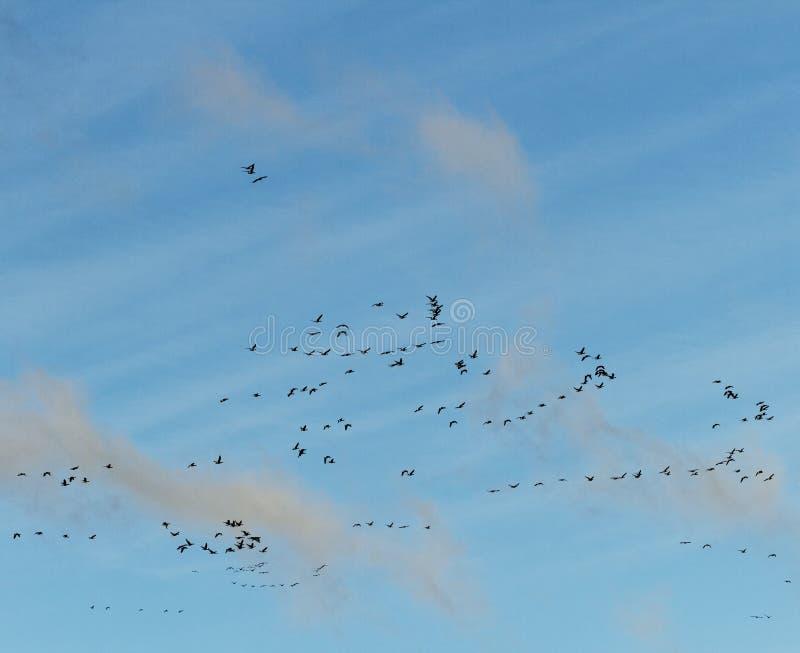 Птицы в небе. стоковая фотография