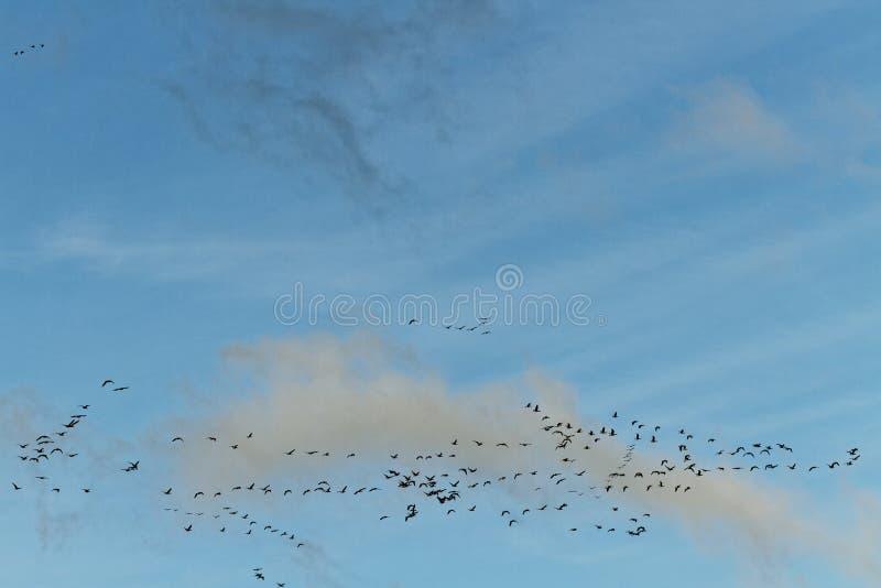 Птицы в небе. стоковое изображение rf