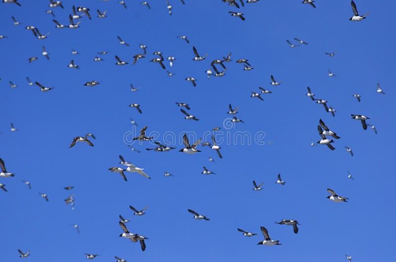 Птицы в небе стоковые изображения