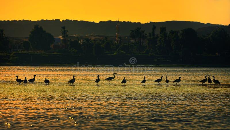 Птицы в отдельном файле стоковая фотография rf
