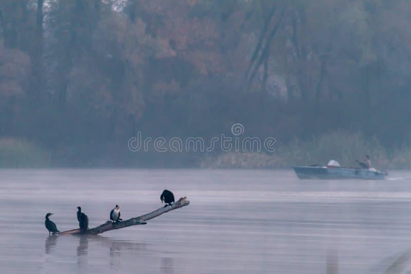 Птицы в тумане и рыбной ловле стоковые изображения