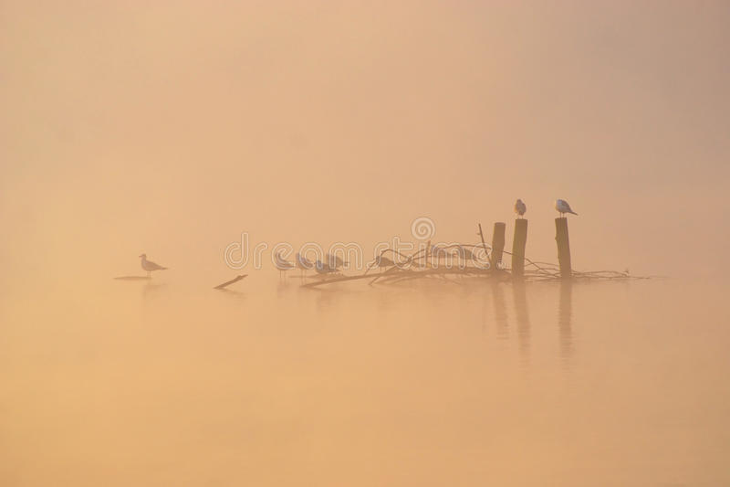 Птицы в туманном утре осени стоковые изображения