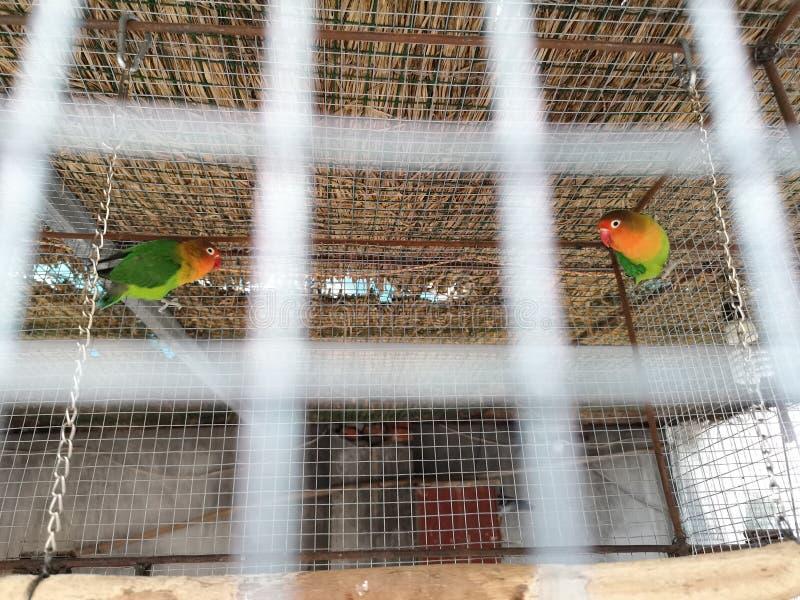 2 птицы в birdcage стоковое фото rf