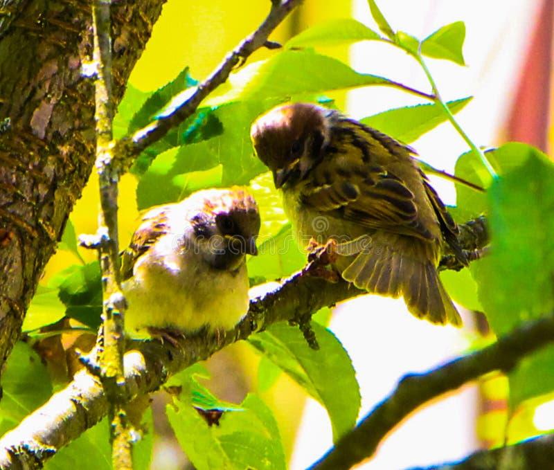 2 птицы в sid и видят стоковые фото