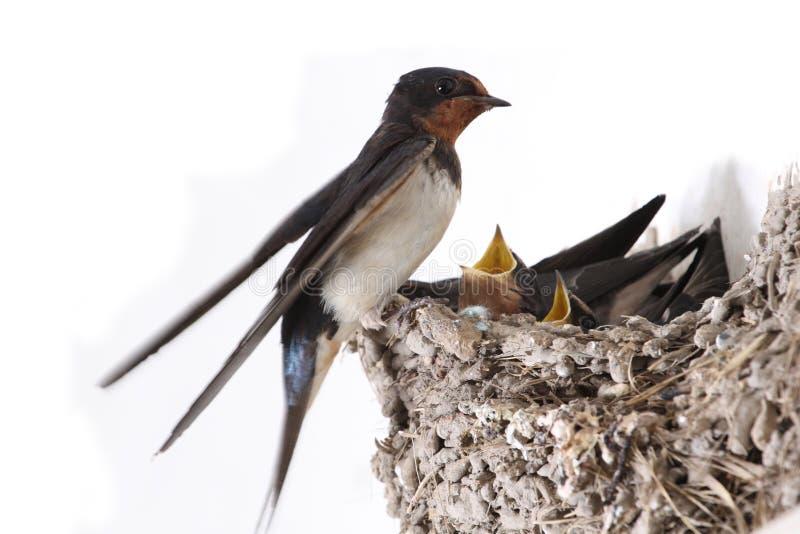 птицы голодные стоковое изображение rf
