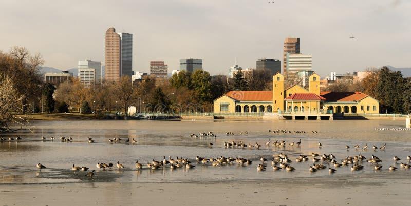Птицы гусынь проникать горизонта Денвера Колорадо озера парк города будут стоковое фото rf