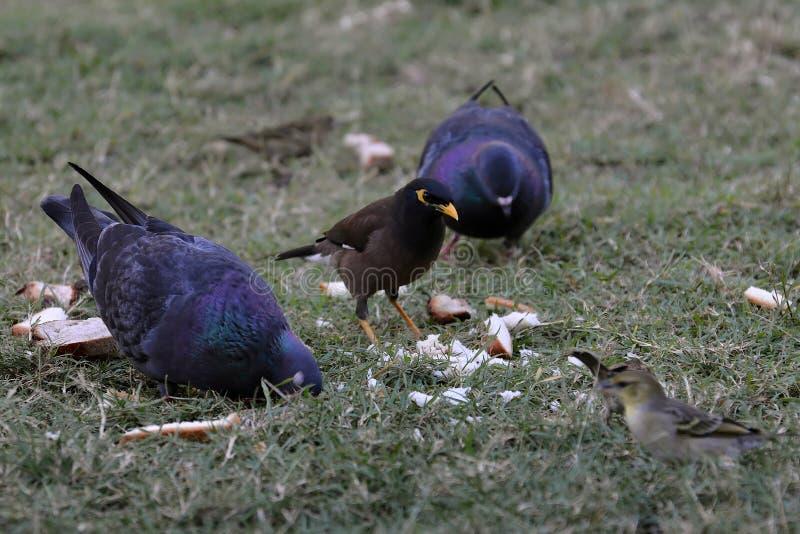 Птицы есть хлеб стоковые изображения
