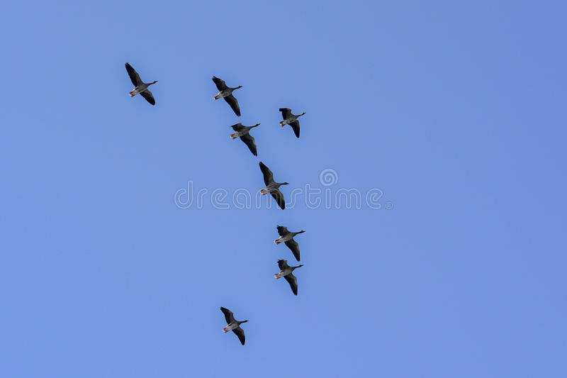 Птицы летают высоко стоковая фотография