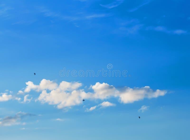 Птицы летают высоко стоковое фото