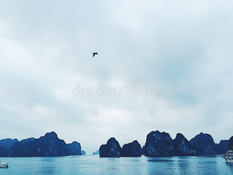 Птицы летая над заливом Halong стоковые изображения