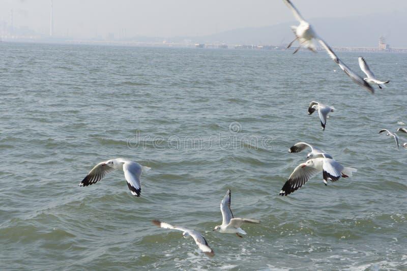 Птицы летая над океаном стоковые изображения