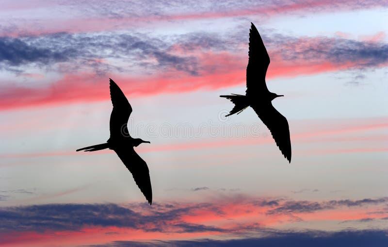 Птицы летая силуэт стоковые фотографии rf