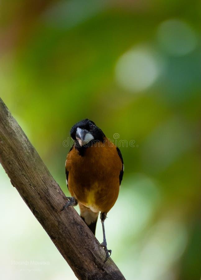 Птицы живя в диких naturals в Мексике стоковая фотография rf