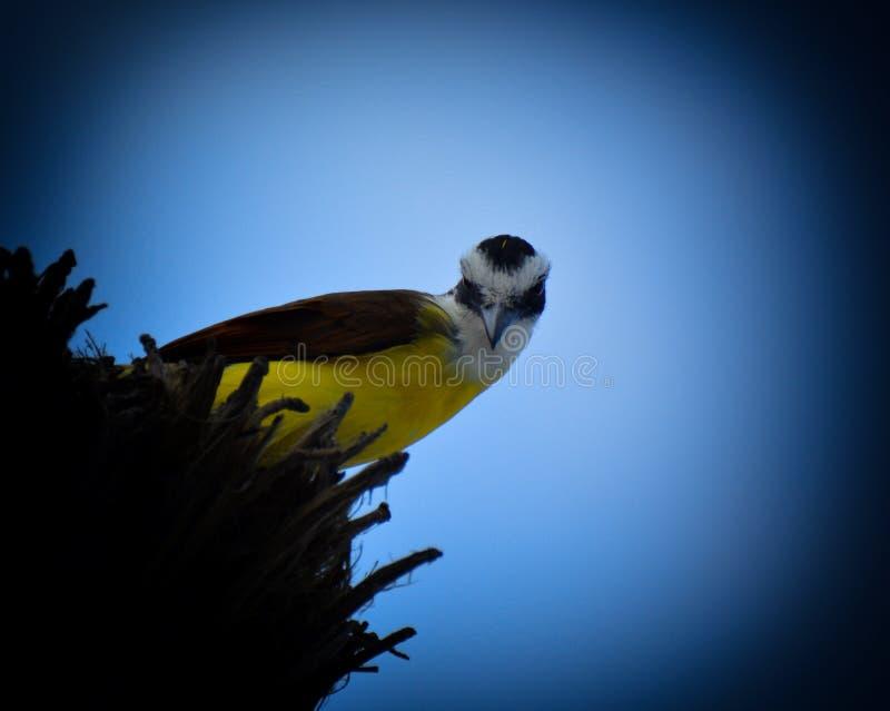 Птицы живя в Мексике стоковые изображения rf