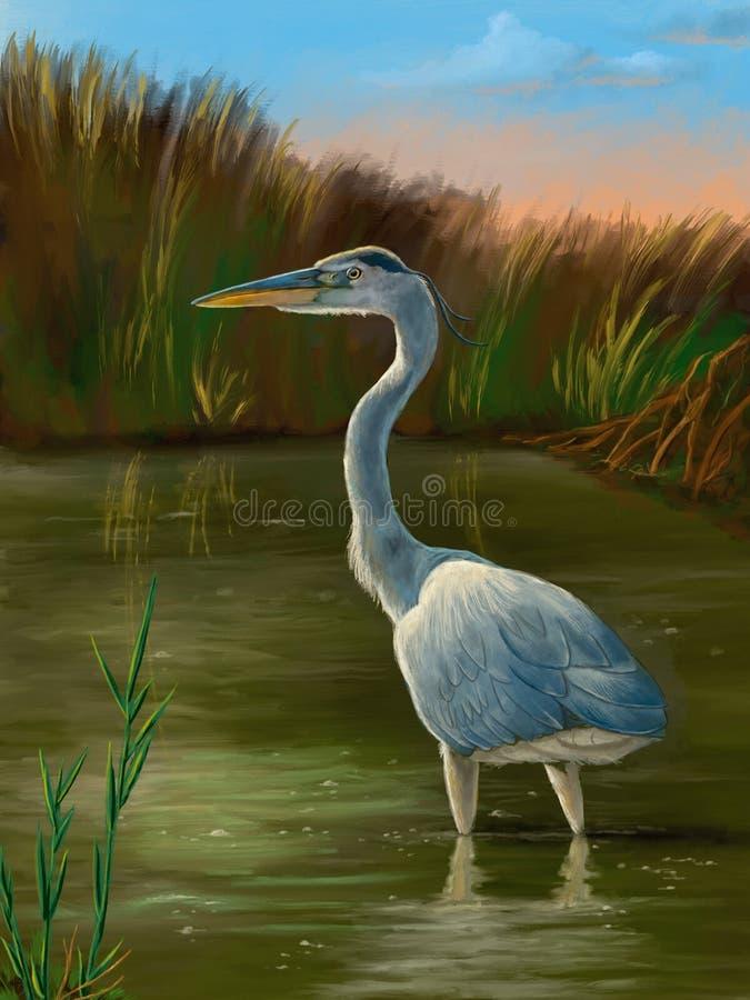 Птицы заболоченного места, голубая цапля иллюстрация штока