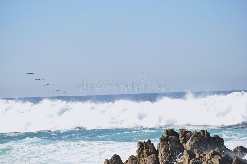 Птицы играя в океане стоковые изображения