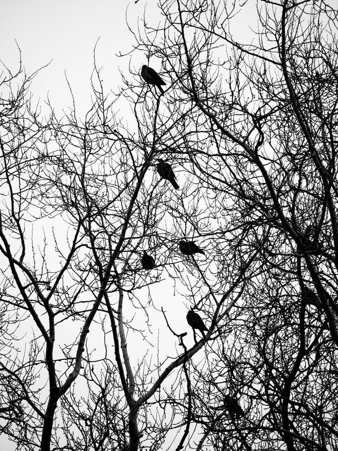 Птицы и деревья стоковое фото rf