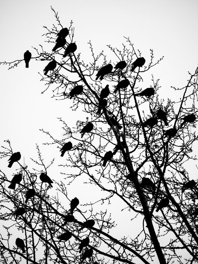 Птицы и деревья стоковое фото