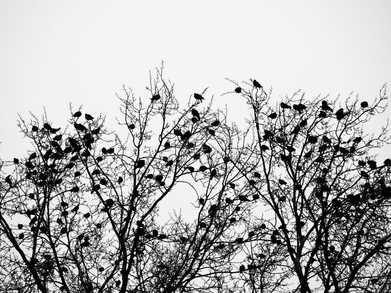 Птицы и деревья стоковые изображения rf