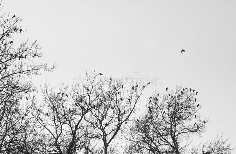 Птицы и деревья стоковые изображения