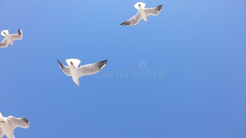птицы и небо стоковые фотографии rf