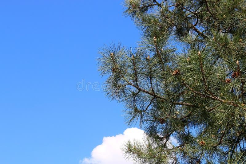 Птицы которые сидят на том основании стоковое изображение rf