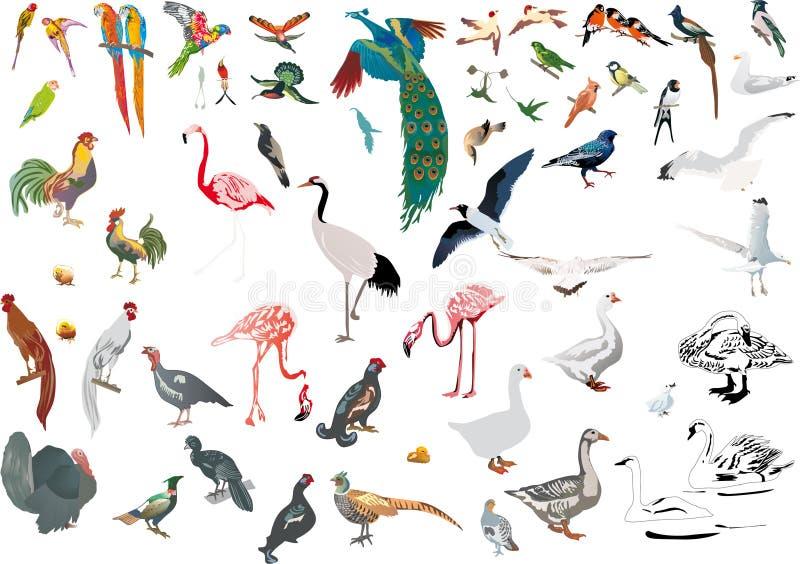 птицы красят изолированный большой комплект иллюстрация вектора