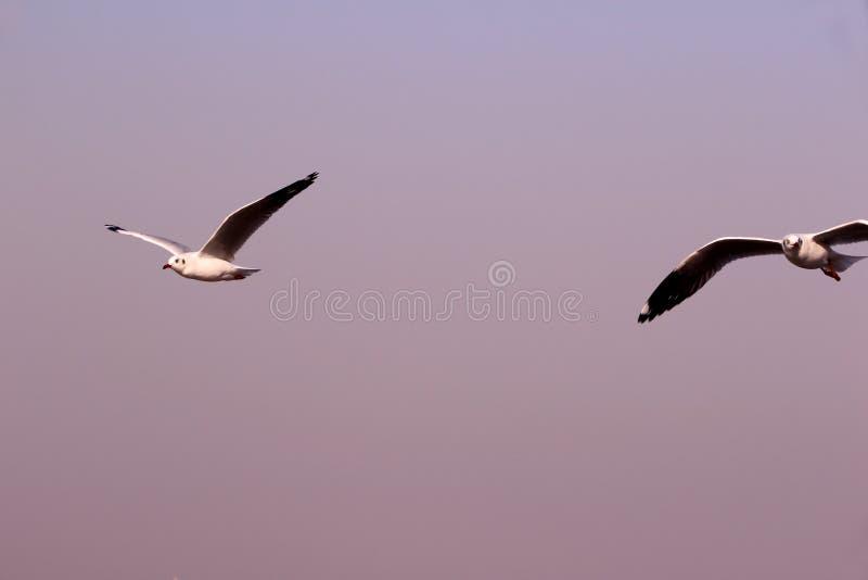 Птицы летают свободно над Аравийским морем стоковое изображение rf