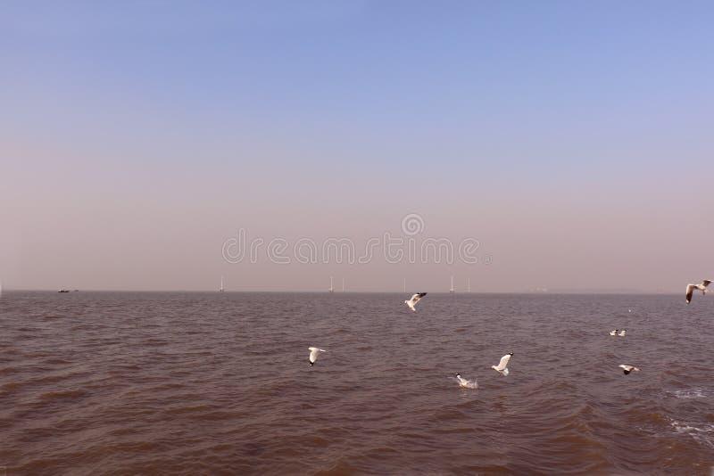 Птицы летают свободно над Аравийским морем стоковое изображение
