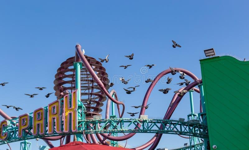 Птицы летая вокруг и завиша над парком атракционов в пристани Калифорния Санта-Моника стоковое фото rf