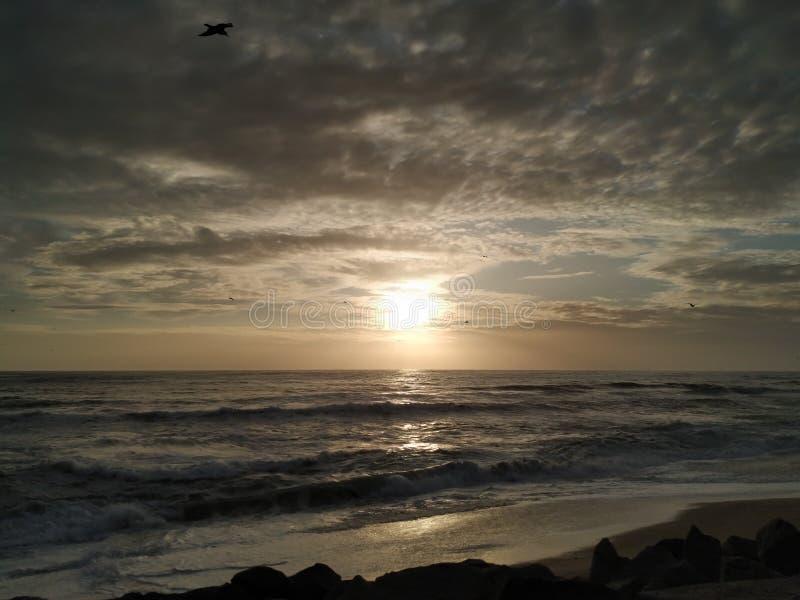 Птицы летая в силуэт против темного унылого неба на заходе солнца на пляже стоковое фото
