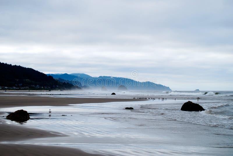 Птицы моря во время отлива на пляже карамболя, Орегоне стоковые изображения