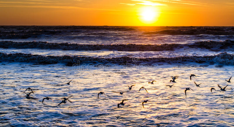 Птицы моря на восходе солнца стоковые изображения