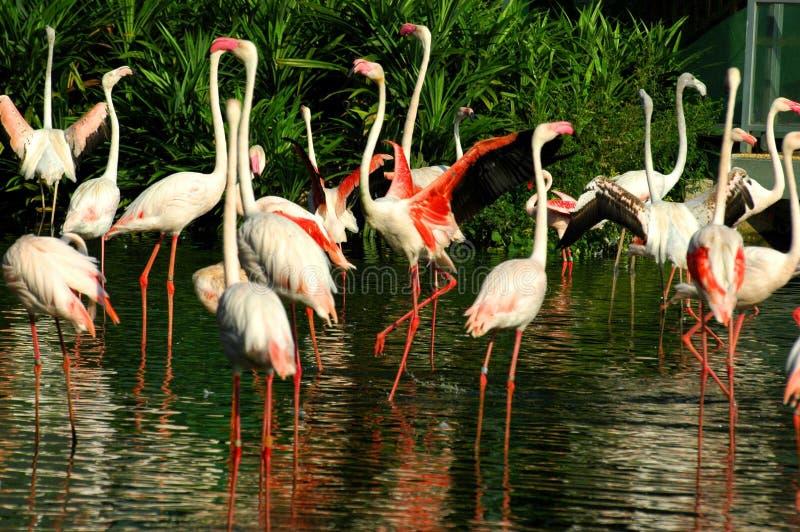 птицы наш мир стоковое фото