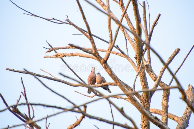 Птицы на ветвях стоковые изображения