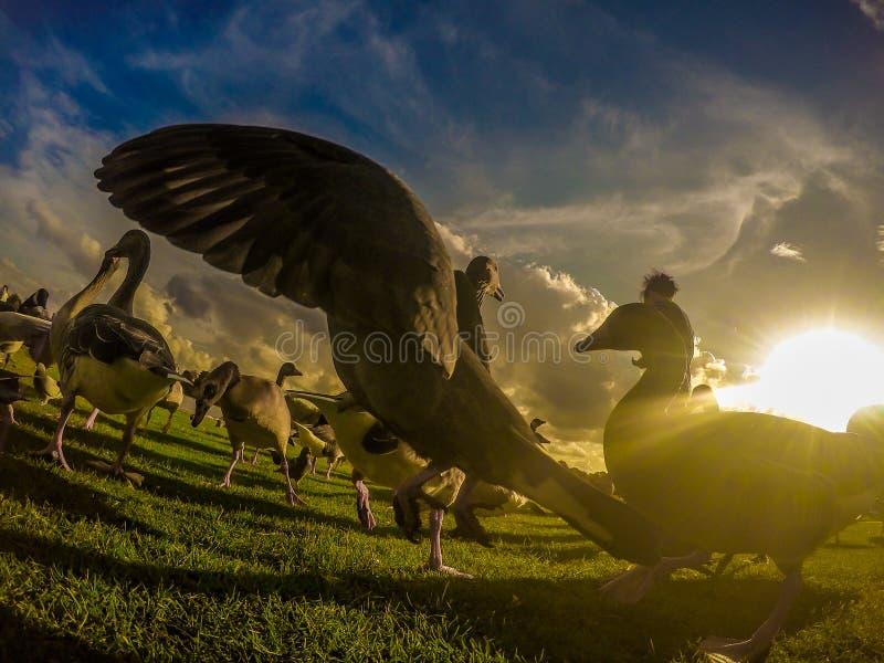 Птицы на Гайд-парке стоковое фото